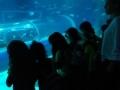 passeio_aquario_JPA (20)