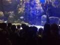 passeio_aquario_JPA (30)